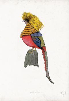 Golden Pheasant - artist signed print